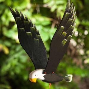 aguila pequeña plumas